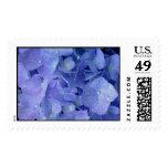 Blue Hydrangea Postage Stamp