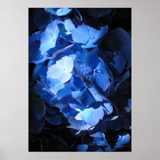 Blue Hydrangea - Poster print