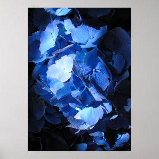 Blue Hydrangea - Poster
