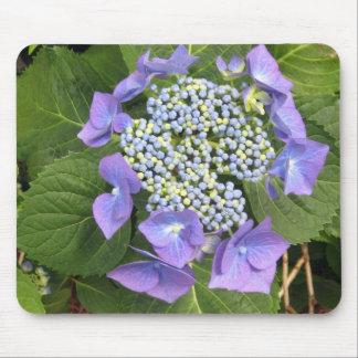 Blue Hydrangea - single head Mouse Pad