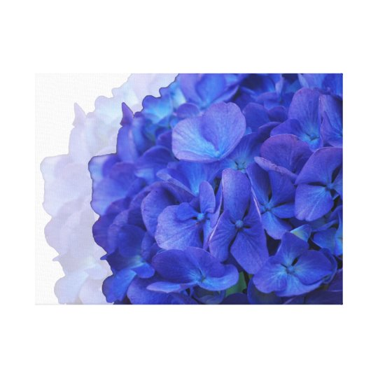 Blue Hydrangea Wrapped Canvas