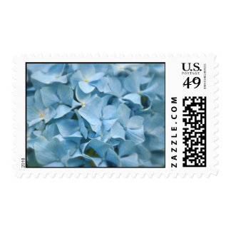 Blue Hydrangeas Blooming in the Spring Postage Stamp