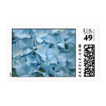 Blue Hydrangeas Blooming in the Spring Stamps