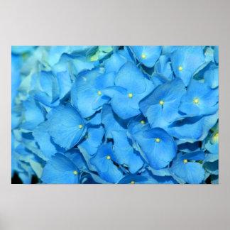 Blue Hydrengea Poster