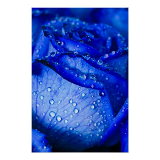 Blue Ice Rose Poster