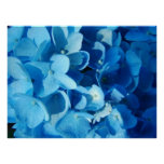 Blue Impression (hydrangea) Print