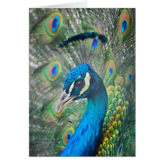 Blue India Pecock Greeting Cards