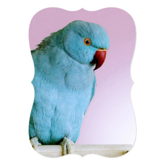 Blue Indian Ring Necked Parakeet With Red Nose Card