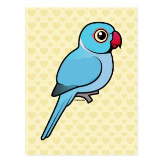 Blue Indian Ringneck Postcard