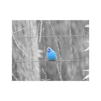Blue Indigo Bird Canvas Print