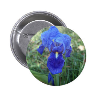 Blue Iris 5 Button