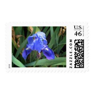 Blue Iris 7 stamp