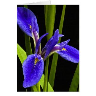 Blue Iris Blank Note Card