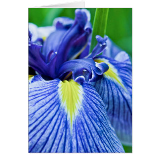 """Blue Iris"" Card"