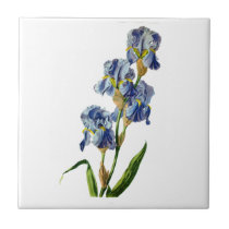 Blue Iris Drawn From Nature by Gerard van Spaendon Tile