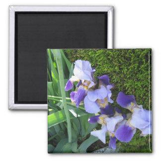 Blue Iris Family2 Magnet