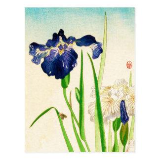 Blue Iris - Japanese watercolor print Postcard