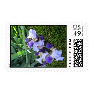 Blue Iris Stamp