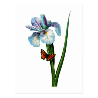 Blue Iris with Butterfly by Redoute Postcard
