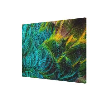 Blue Irridescent Feather Design Canvas Print