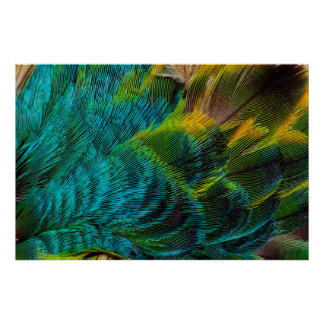 Blue Irridescent Feather Design Poster