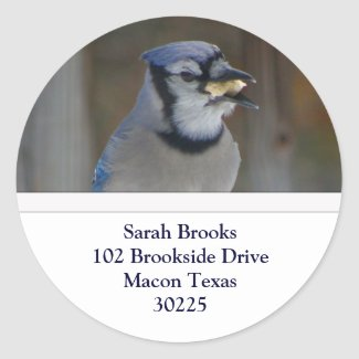 Blue Jay Address Labels Round Stickers