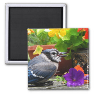 Blue Jay and Flowers 2 Inch Square Magnet