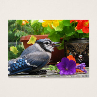 Blue Jay and Flowers ATC Business Card