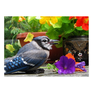 Blue Jay and Flowers ATC Large Business Card