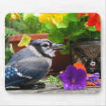 Blue Jay and Flowers Mouse Pad