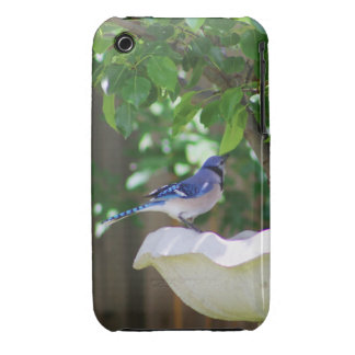 BLUE JAY AT BIRD BATH Case-Mate iPhone 3 CASES