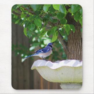 BLUE JAY AT BIRD BATH MOUSE PAD