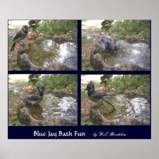 Blue Jay Bath Fun Posters