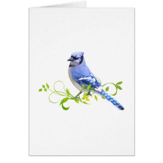 Blue Jay Bird Card
