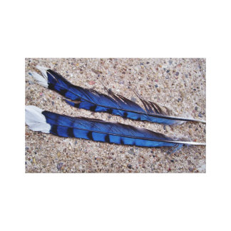 Blue Jay bird feathers Stretched Canvas Print