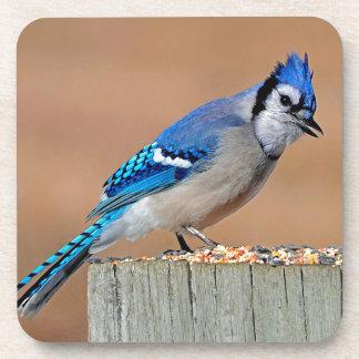 BLUE JAY BIRD FULL BODY PHOTO, BLUEJAY GIFThttp:// Beverage Coaster