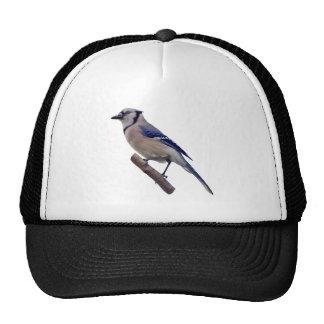Blue Jay Bird Hat