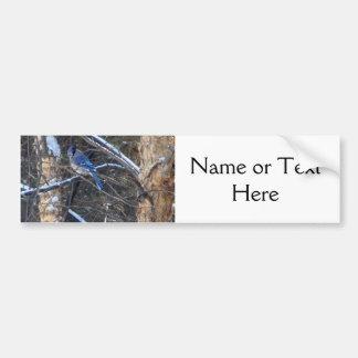 Blue Jay Bird in Winter Trees Bumper Sticker