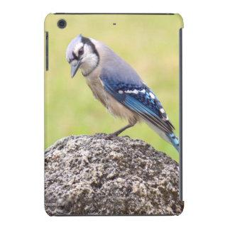 Blue Jay bird iPad Retina Case
