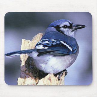 Blue Jay  Bird Lovers Mouse Pad