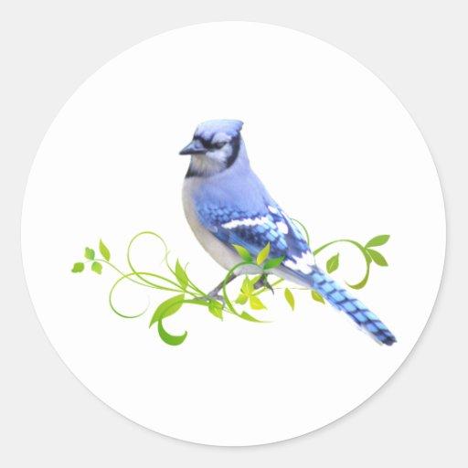 Blue Jay Bird Round Stickers