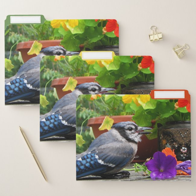 Blue Jay Bird with Flowers Floral File Folder Set