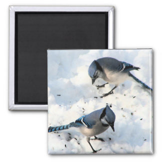 Blue Jay Birds in Snow Nature 2 Inch Square Magnet