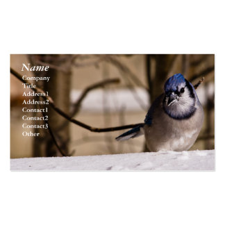 Blue Jay - Business cards