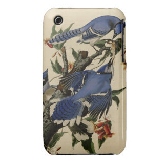 Blue Jay iPhone 3 Case-Mate Case