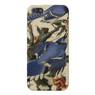 Blue Jay Case For iPhone 5