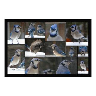 Blue Jay Collage Photo Print
