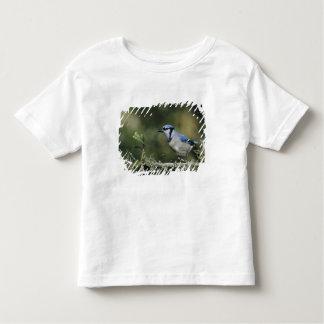 Blue Jay, Cyanocitta cristata,adult, San Tee Shirt