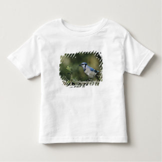 Blue Jay, Cyanocitta cristata,adult, San Toddler T-shirt