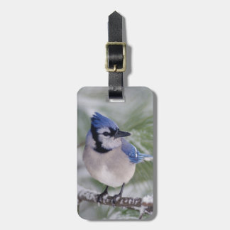 Blue Jay, Cyanocitta cristata Bag Tag
